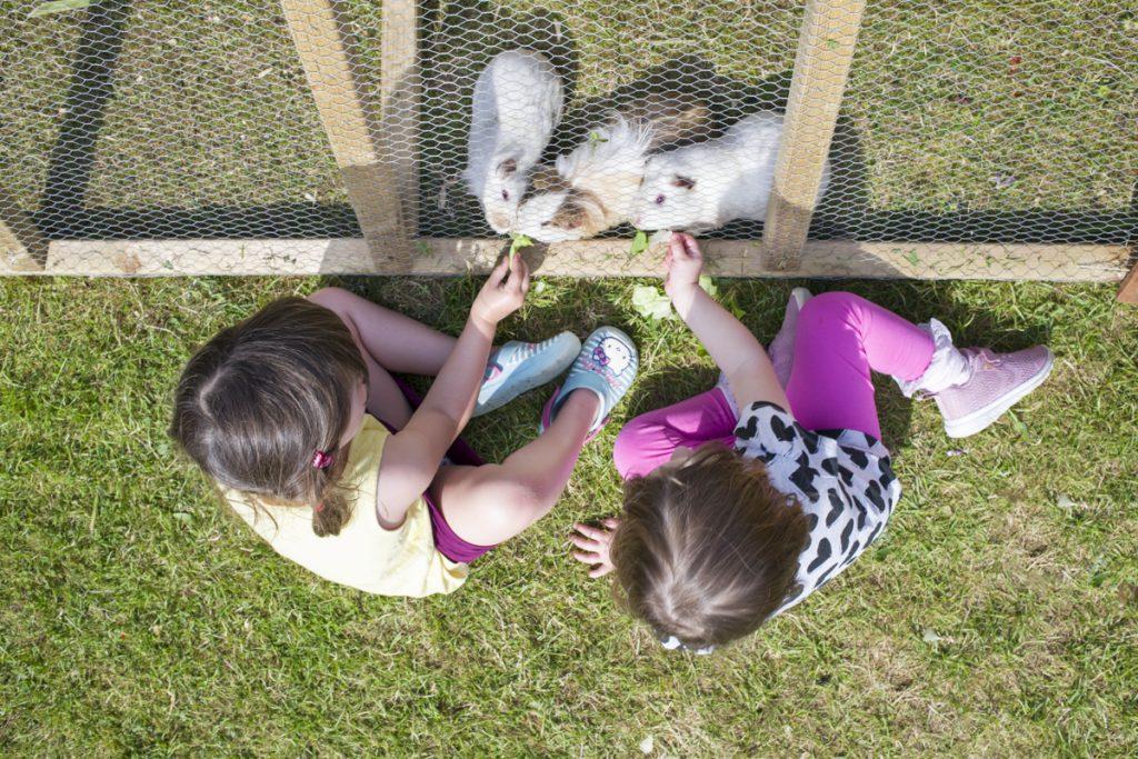 Family campsite in Cornwall, children's pet area