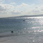 seal godrevy beach